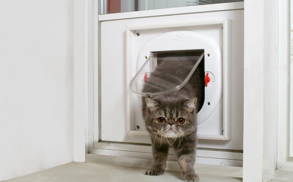 Einbau von Katzenklappen