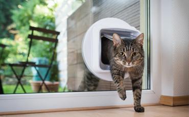 Der Einbau einer Katzenklappe ist auch direkt in die Scheibe möglich.